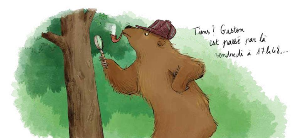 slider bear