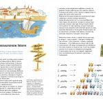 MATHEMATICS - HISTORY OF IDEAS img1